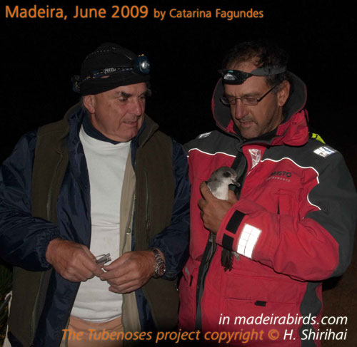 Frank Zino & Hadoram Shirihai with Zino's petrel in hand