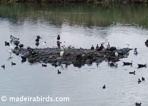 Lugar de Baixo Pond